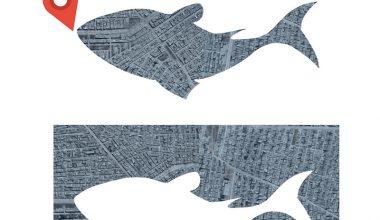 سمكة في سفينة نوح